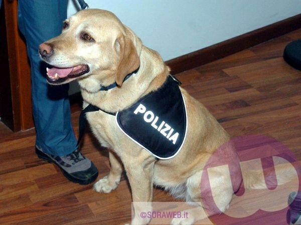 Nora A Scuola Il Labrador Cane Poliziotto Fiuta La Presenza Di